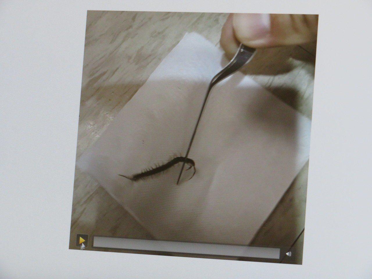 10多分蜈蚣跑進女患者耳朵,嘉義長庚醫院耳鼻喉科主任徐正明醫師,眼明手快用鑷子取...