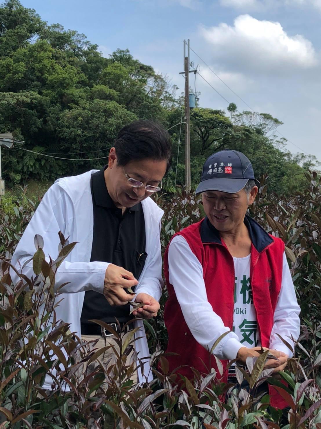 前行政院長張善政今在臉書發文分享自己去新北市坪林品茶的見聞。圖/取自張善政臉書