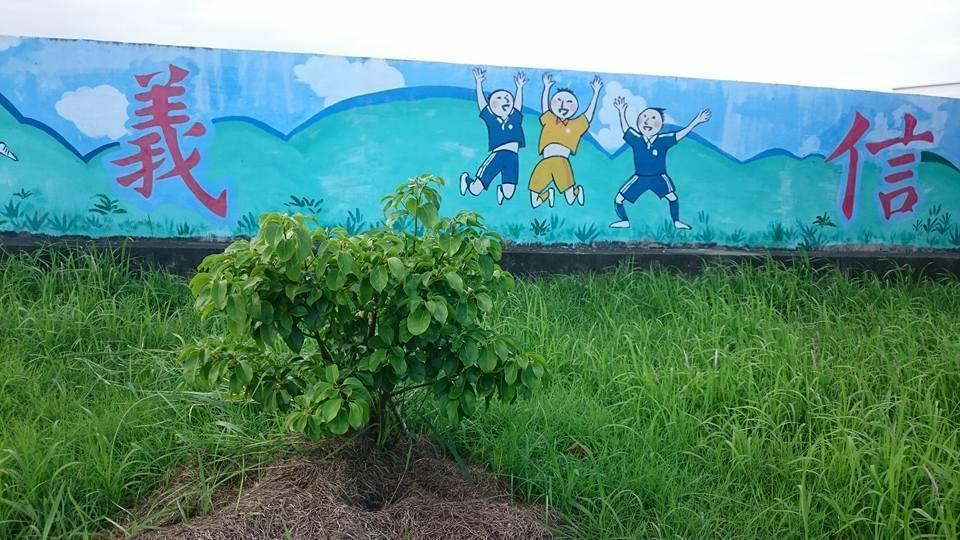 綠色冀泉負責人陳宇華分享牛樟樹壽命可達300年。圖/綠色冀泉提供