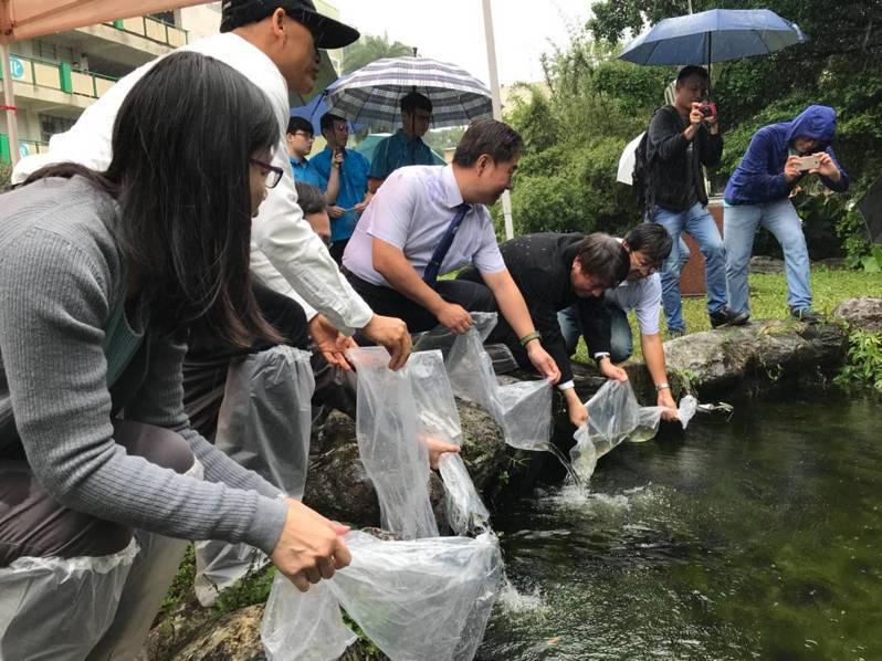 海大、海科館等今天在基隆高中生態池進行臺灣特有保育魚類「臺灣梅氏鯿」移地復育放流,增闢校園復育基地。圖/海大提供