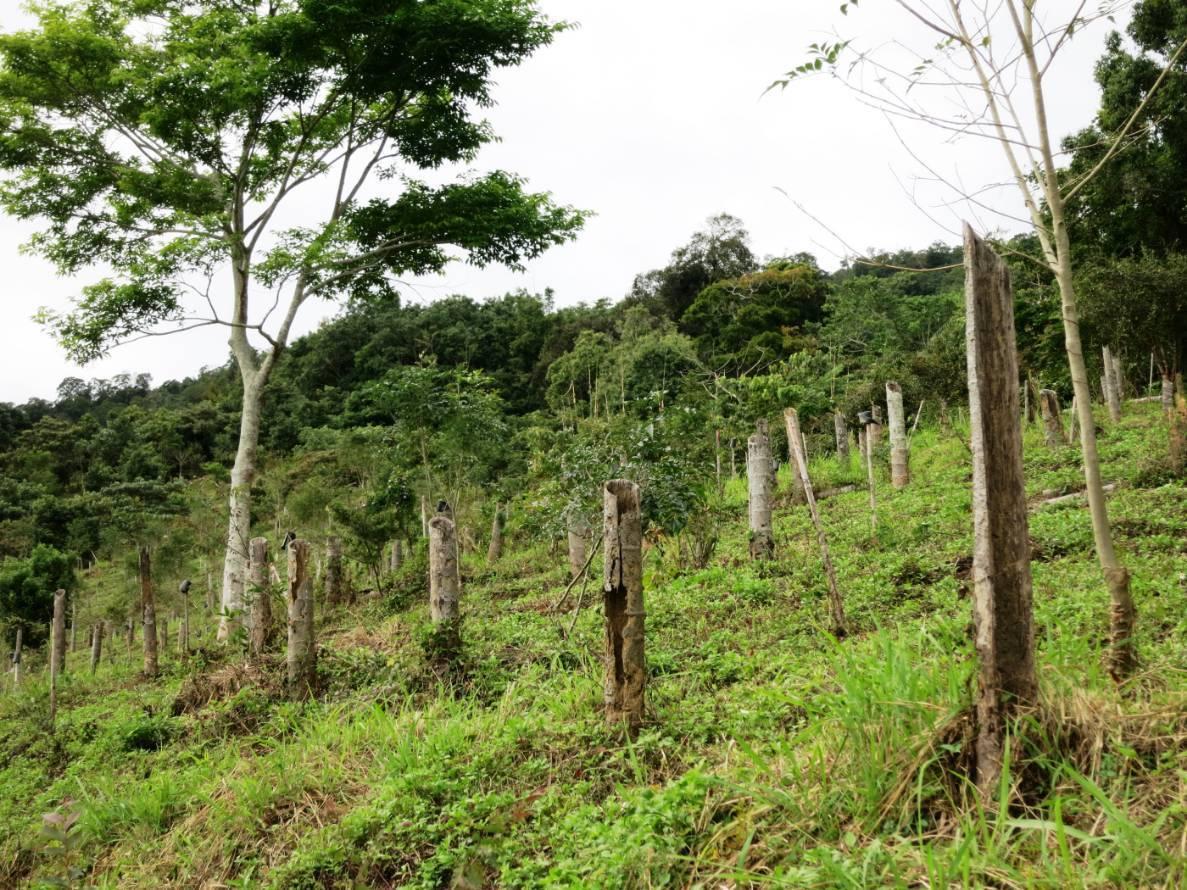 剷除檳榔復育造林大地恢復生態。圖/嘉義林區管理處提供