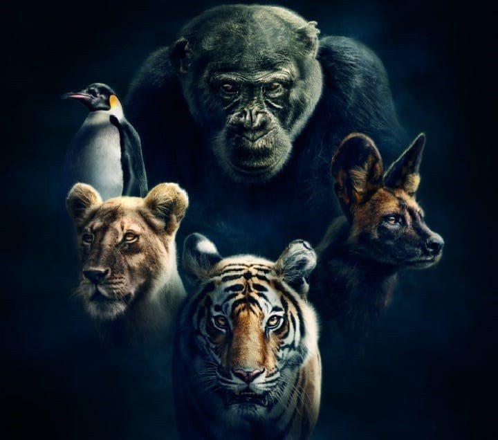 「王朝」是BBC Earth頻道年度大片,號稱動物版宮鬥劇。圖/摘自BBC