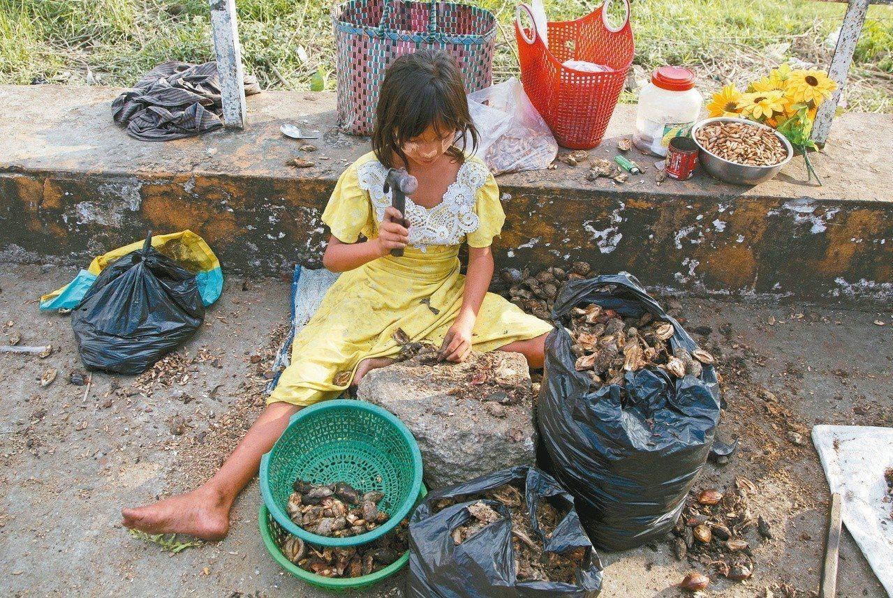 聯合國示警,亞太地區飢餓情況改善有限。圖為一日緬甸仰光街頭女孩以鐵鎚敲殼製作零食...