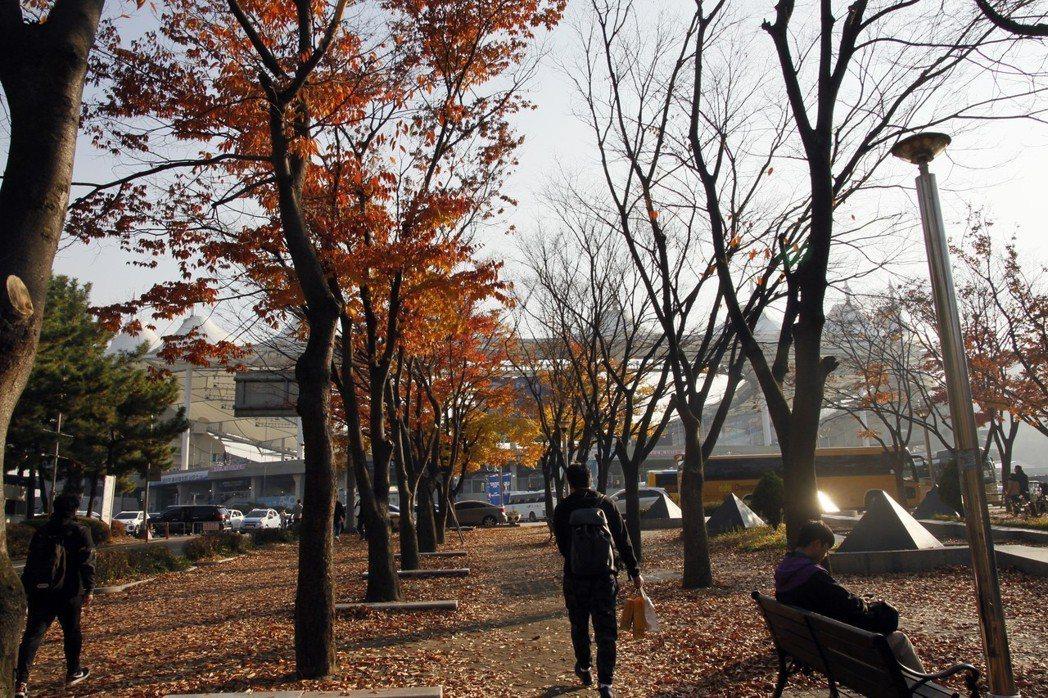十一月初的韓國,日夜溫差非常大,街上行道樹早已被秋風染黃。