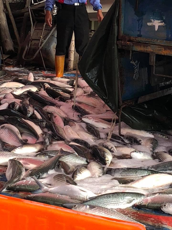 漁民在烏魚池裡圍網,連網帶魚吊掛上岸,很多老饕爭相搶購。。照片/賴清美提供