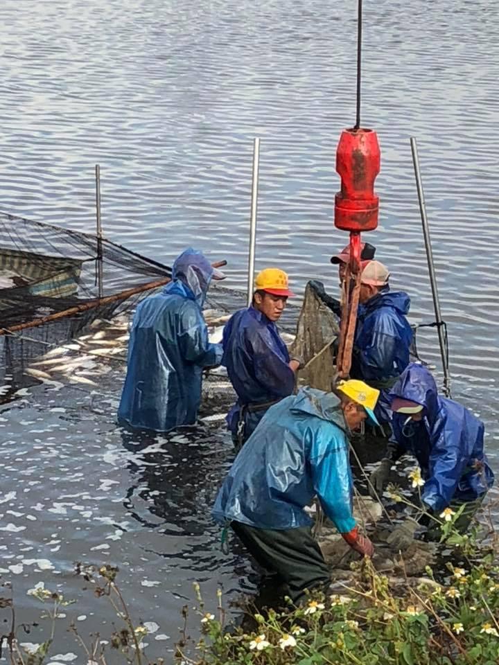 漁民在烏魚池裡圍網,連網帶魚吊掛上岸。照片/賴清美提供