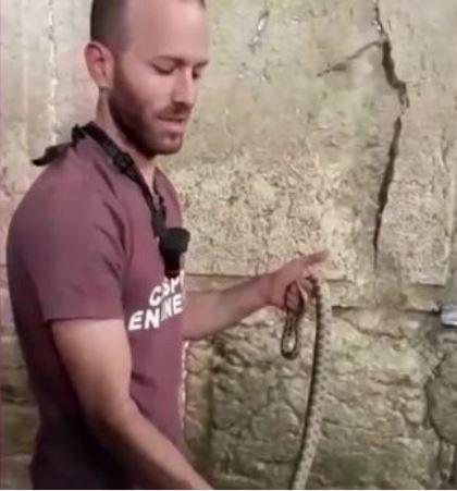 一條蛇從以色列的哭牆縫隙爬了出來。圖/攝自mirror.uk