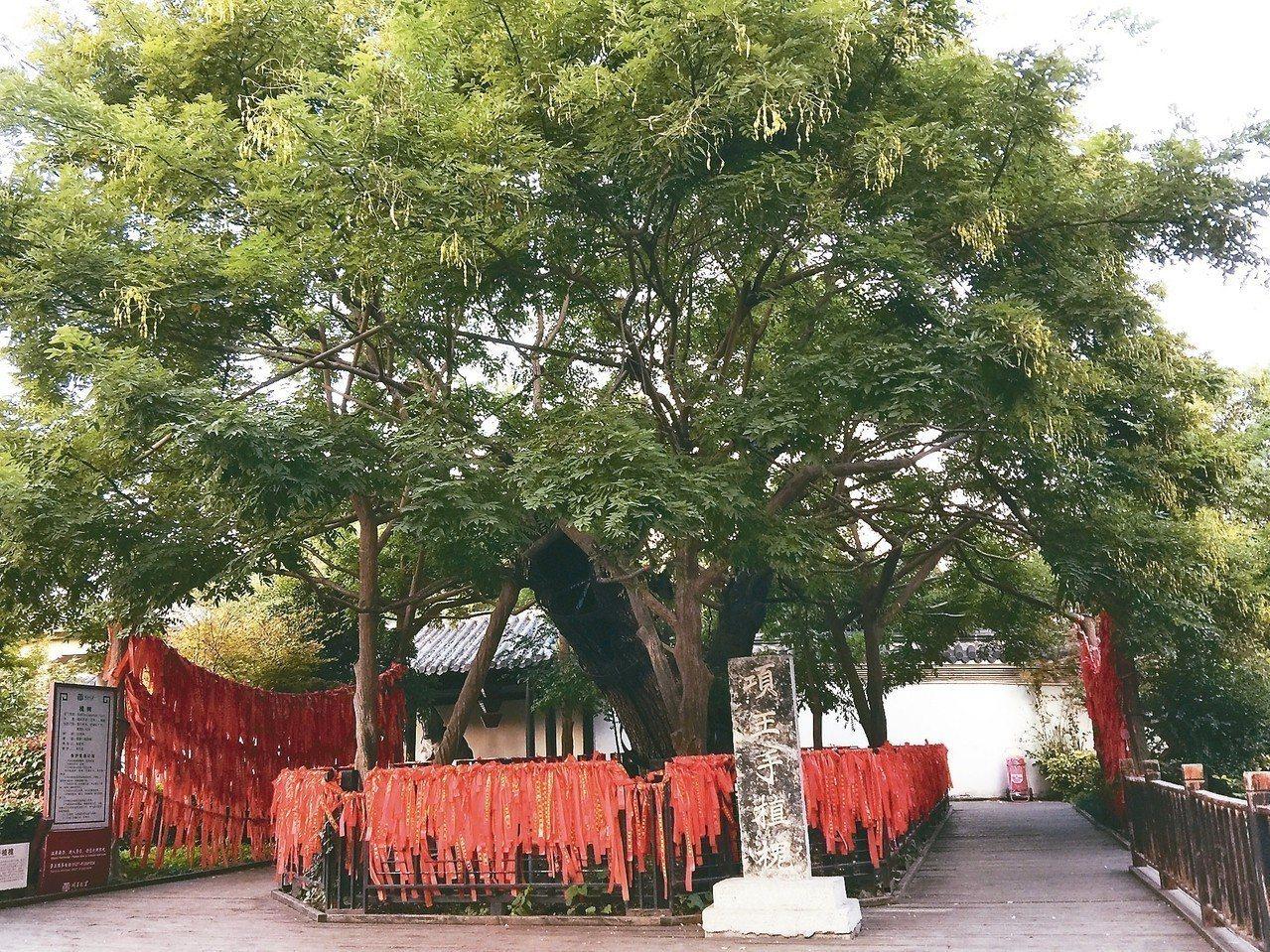 項羽手植槐樹