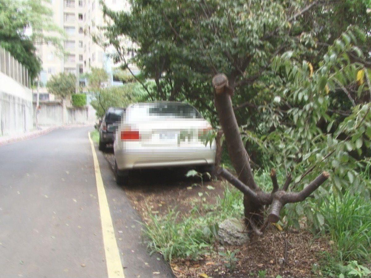 淡水區新民街19巷,路旁停著一整排的車輛,將老櫻花樹撞倒,也將樹根壓在車輪壓底,...