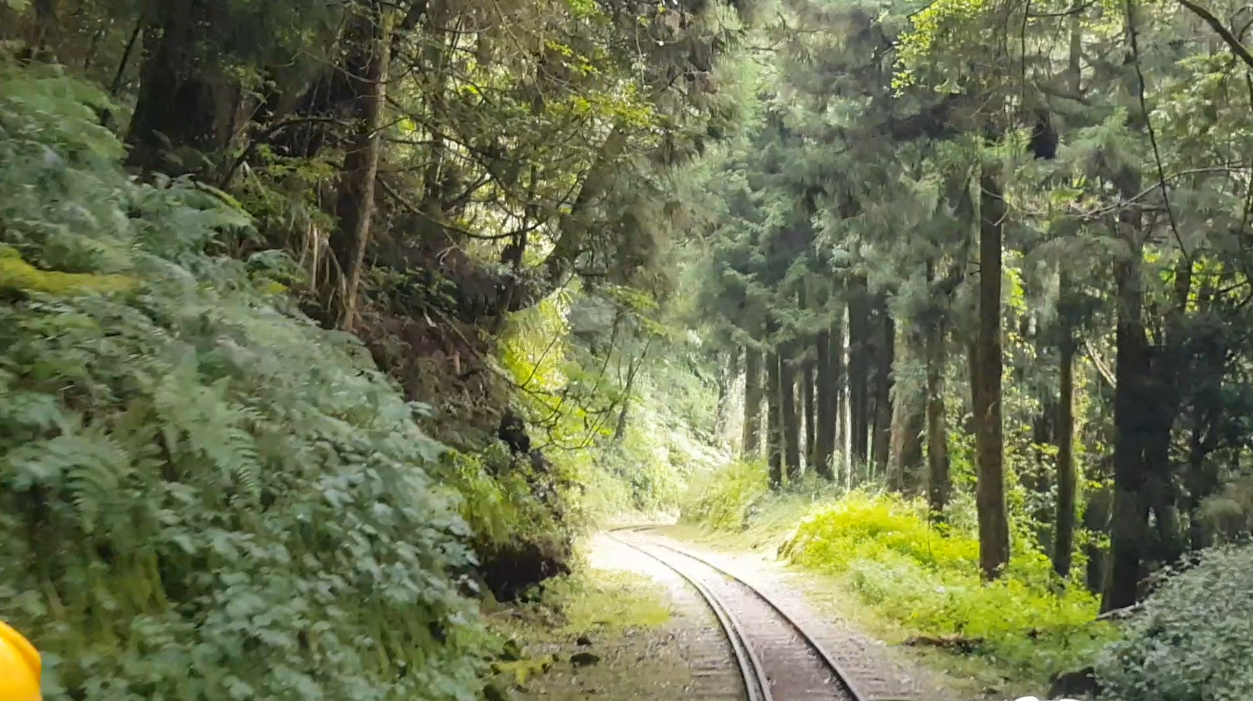 阿里山森林遊樂區中,有一條過去運送木材的路線,全長1.6公里,林鐵處現階段開放民...