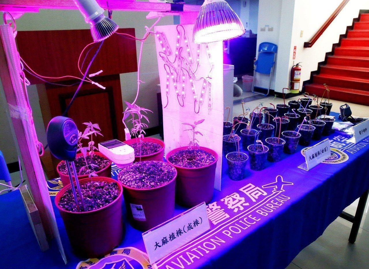 27歲陳姓水電工自學種植大麻技術,在自家陽台種了30株大麻,還沒有長大就被航警局...
