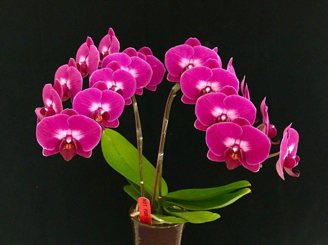 蘭花形貌多樣,一直以來即是給人高雅君子的印象 美達蘭業 / 提供