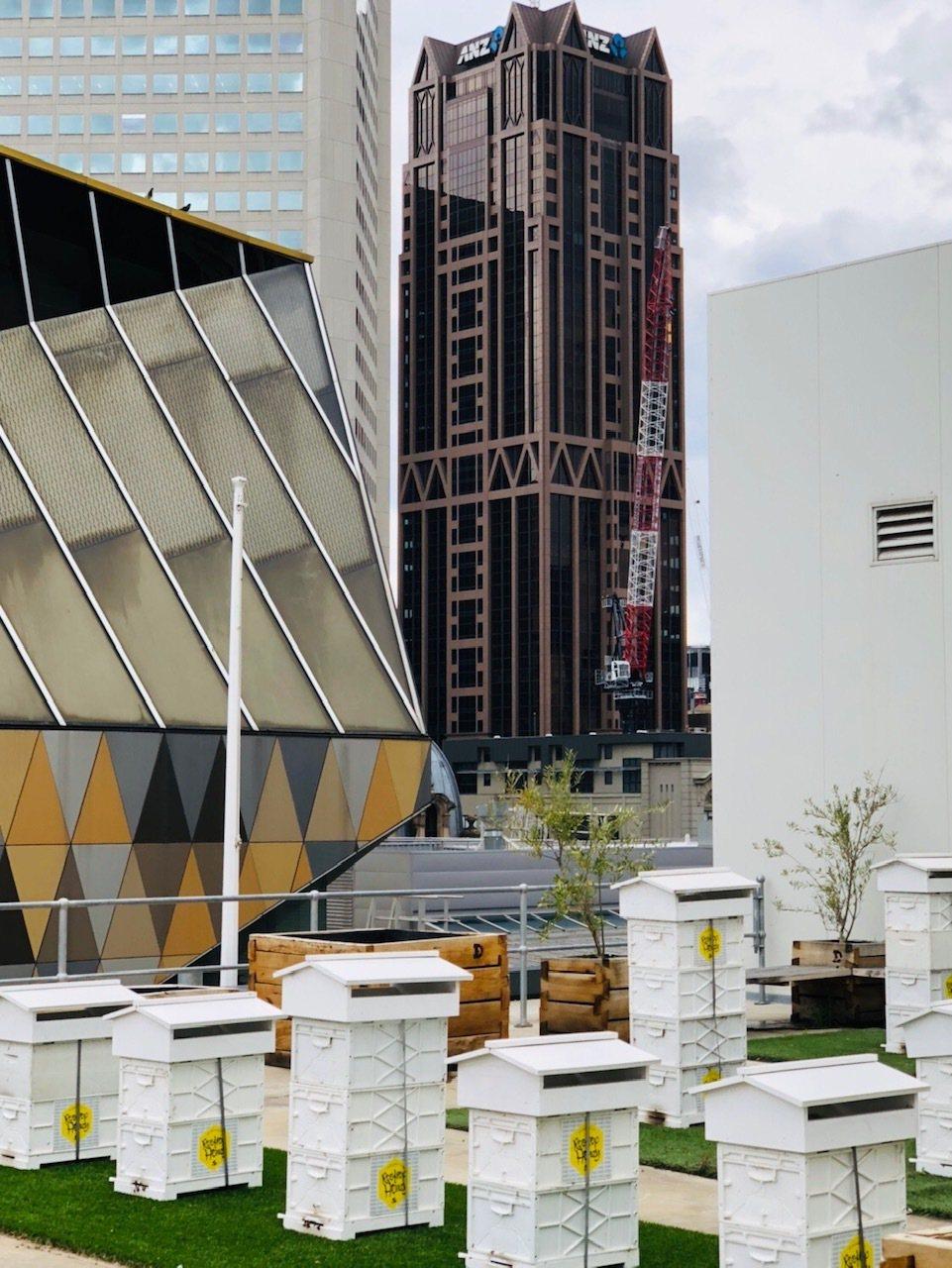 Rooftop Honey在墨爾本鬧區頂樓養起蜜蜂,兼顧永續與生態。記者錢欽青攝...