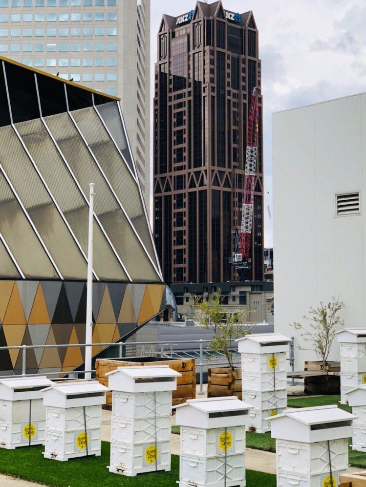 Rooftop Honey在墨爾本鬧區頂樓養起蜜蜂,兼顧永續與生態。圖/記者錢欽...