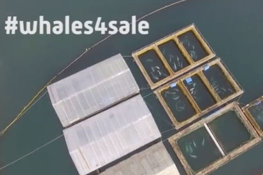 媒體拍到太平洋的「鯨魚監獄」。 翻攝臉書