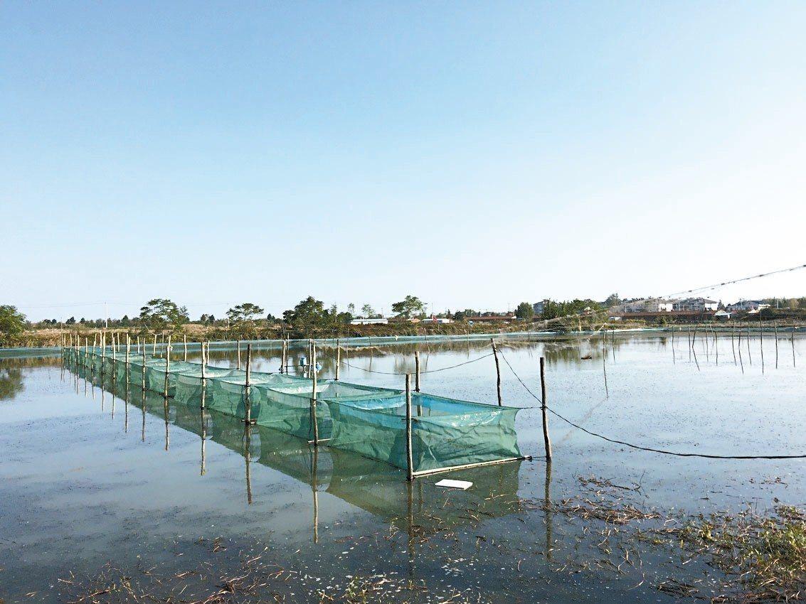洪澤湖大閘蟹養殖池。 記者汪莉絹/攝影