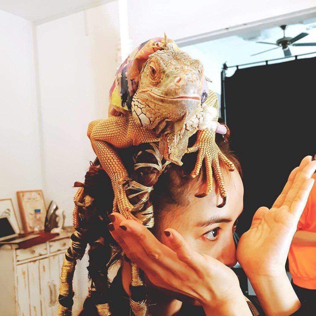 蔡依林頭頂著一隻蜥蝪。 圖/擷自蔡依林IG