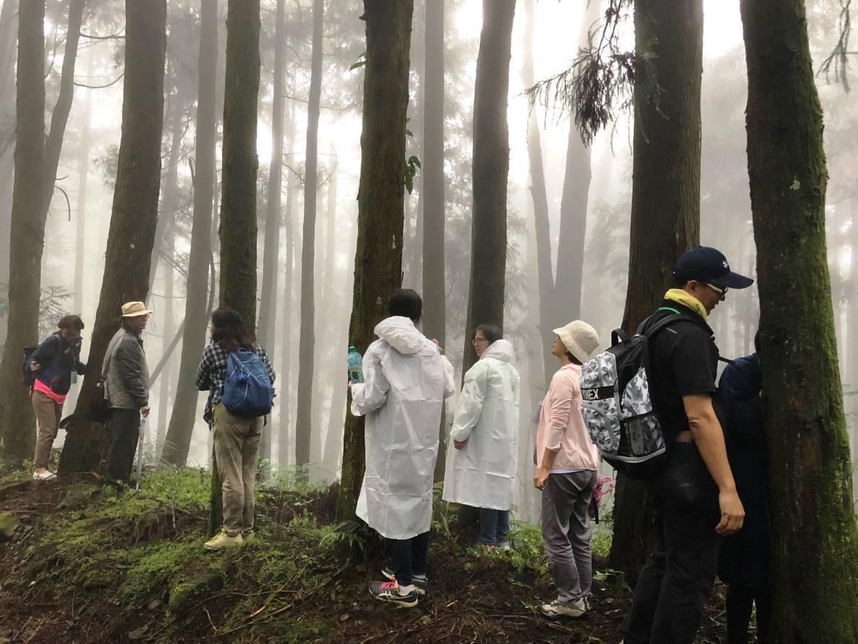 抱樹體驗需專人指導才能進行,否則恐破壞生態和樹木生長。圖/嘉義林區管理處提供