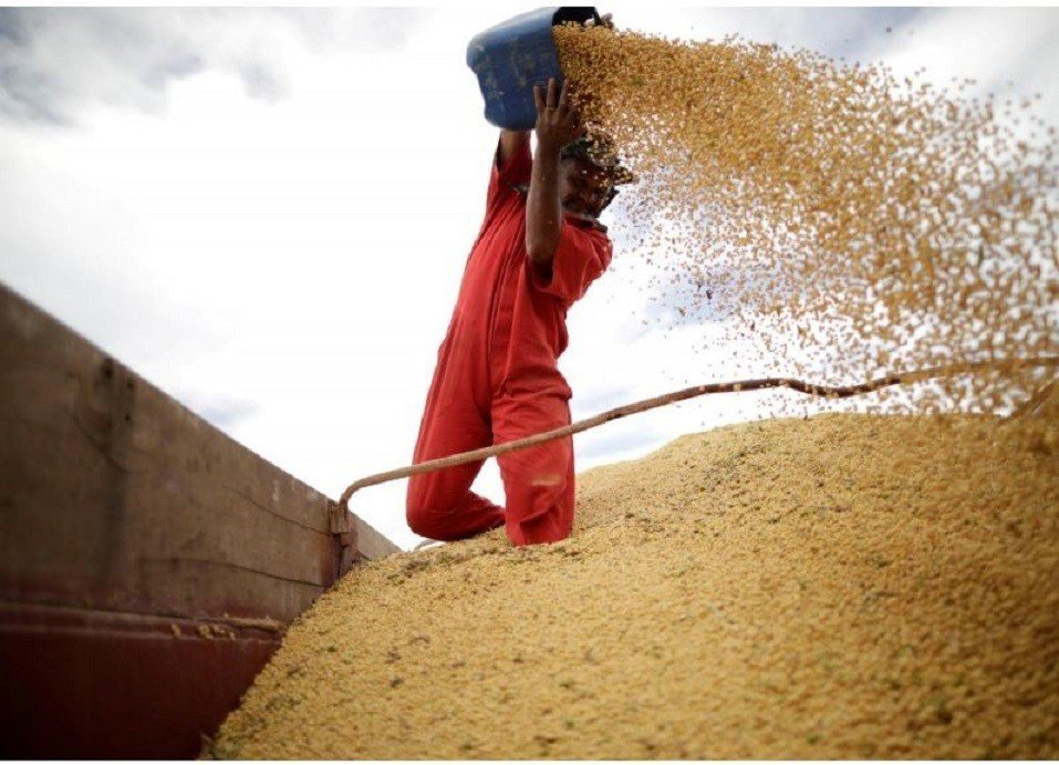 中國海關總署8日公布,大陸10月大豆進口年增18%。分析指出,中美貿易戰讓進口商...