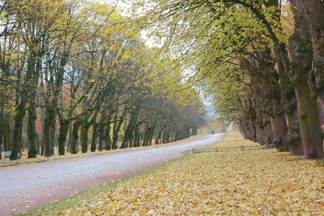 位於聖彼得堡的巴甫洛夫斯克宮與花園有「世界上最好花園」的美譽。 圖/陳志光、游慧...