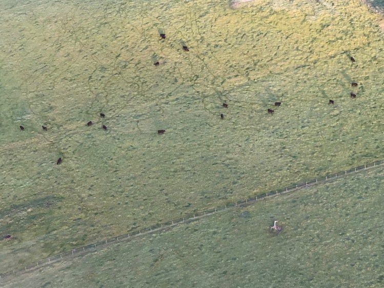 熱氣球上連地面牛群的鳴叫聲都聽得到。圖/記者錢欽青攝影。