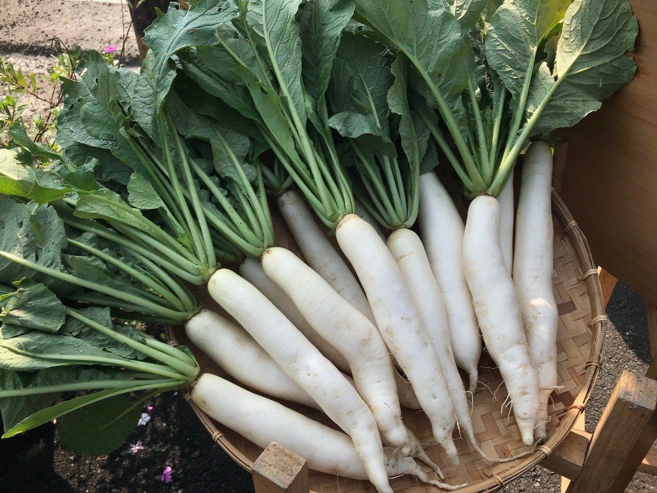 美濃特產白玉蘿蔔。記者徐白櫻/翻攝