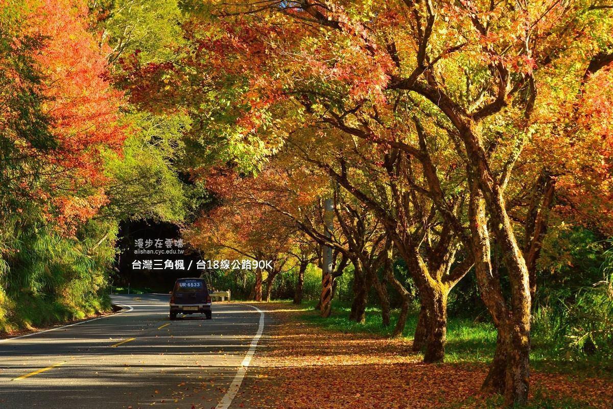 台18線90k處,可欣賞到台灣三角楓。圖/《漫步在雲端的阿里山》粉絲團授權使用