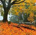 大片楓葉鋪成紅地毯!阿里山達人的「私房賞楓景點」