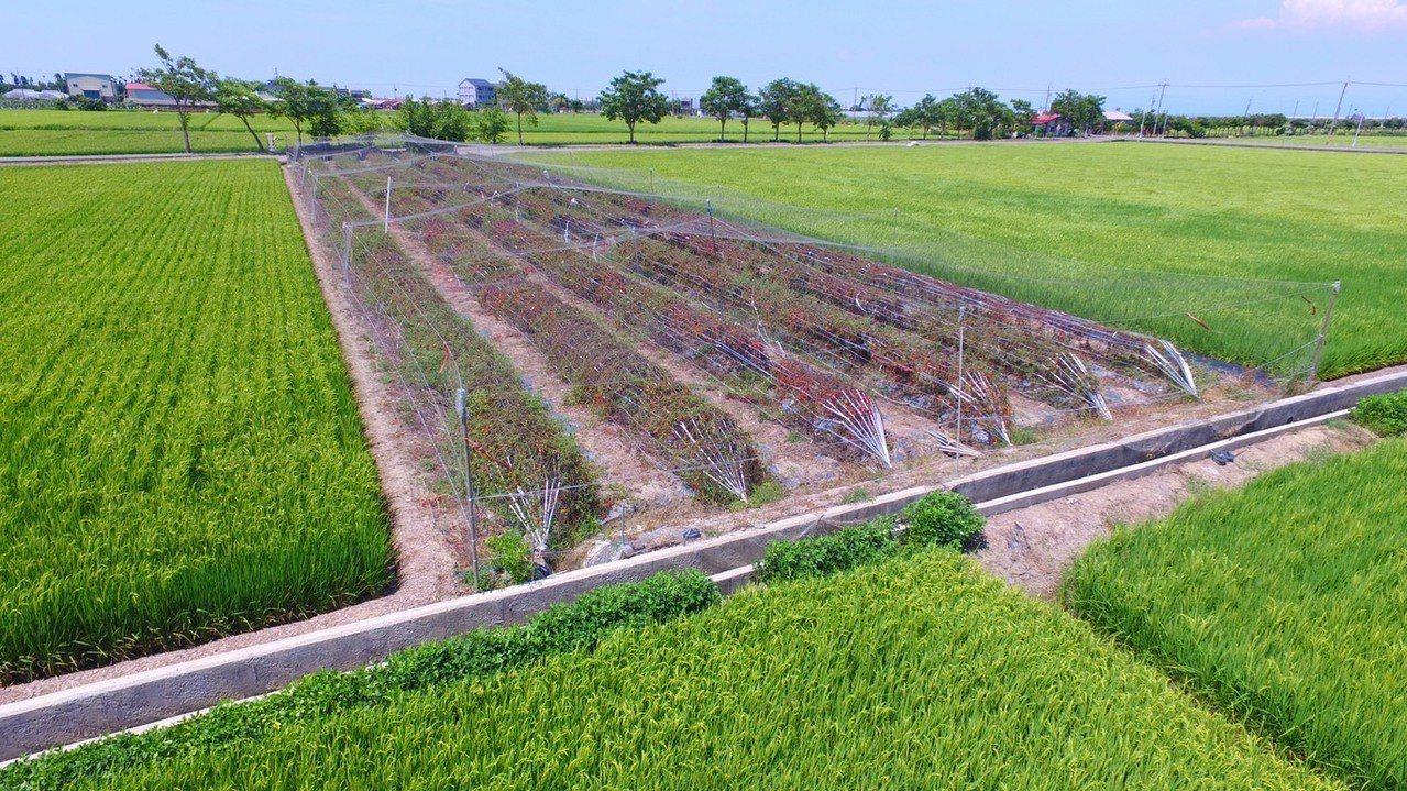 推廣農民使用的防鳥網。記者謝恩得/翻攝