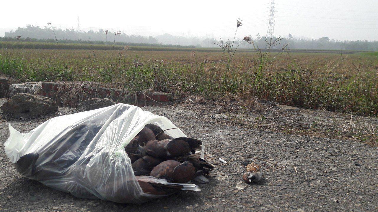 愛護動物人士連兩天到現場撿拾鳥屍,以防毒鳥事件再擴大到其他動物。圖/李翊楷提供