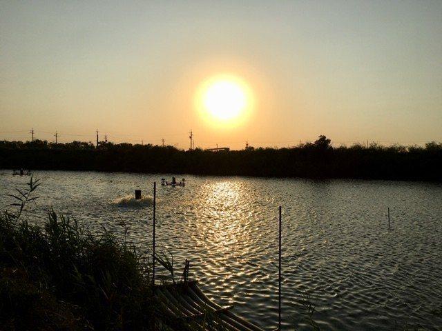 選用嘉義在地無毒養殖魚池「邱家兄弟水產」所生產的食材。圖/野台繫提供