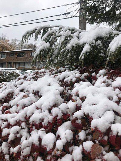 大芝加哥地區9日降下今冬第一場積雪。特派員黃惠玲/攝影