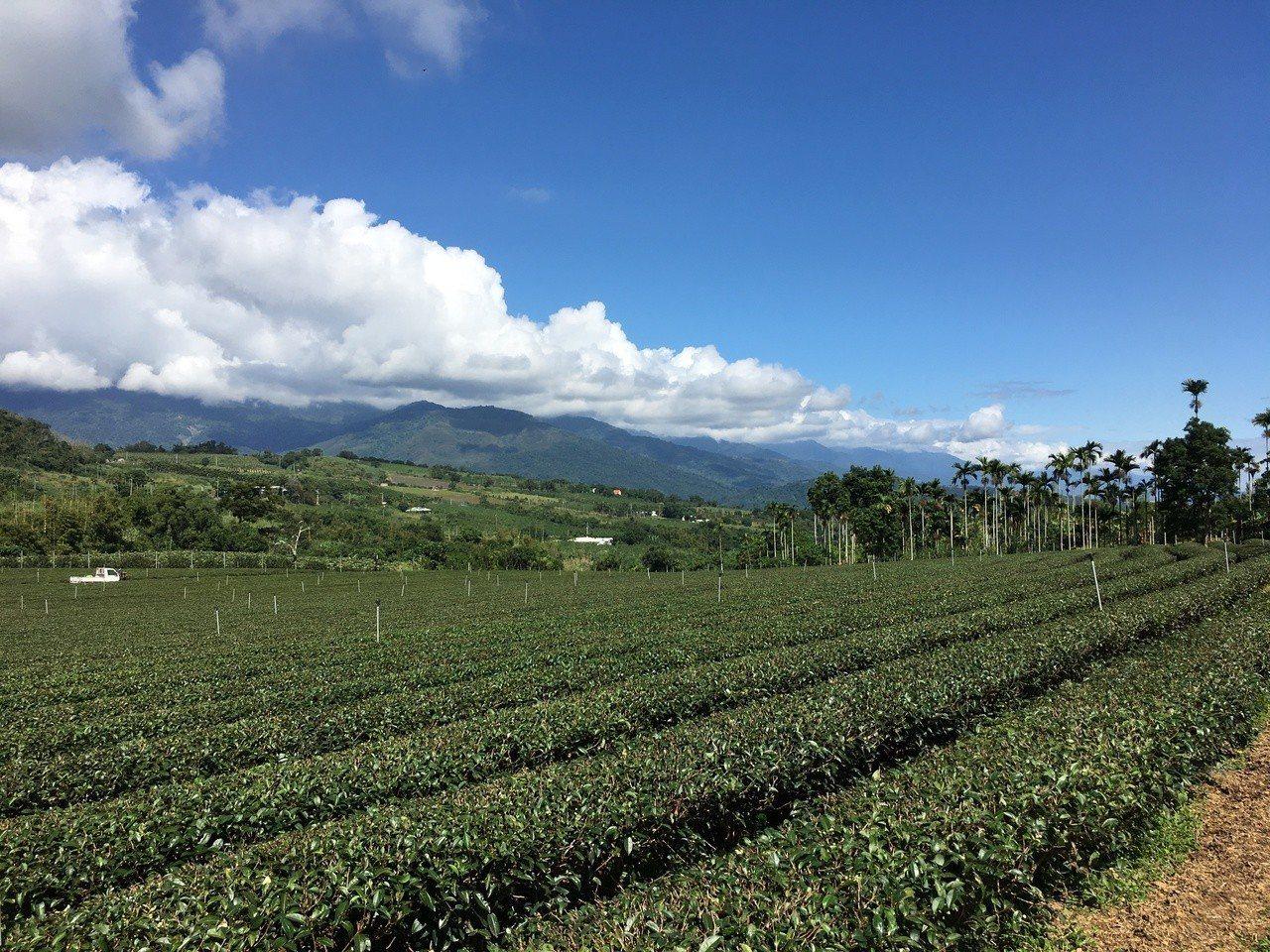 花東縱谷上的有機茶園,風景秀麗,可遠眺瑞穗;遊客可下茶園採茶、煮茶,更有日本旅客...