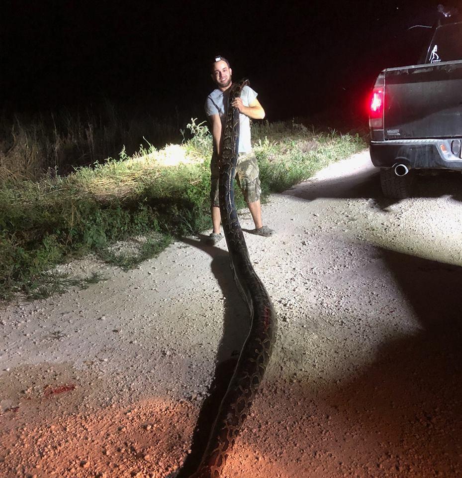 佛州捕蛇人潘尼斯頓日前在邁阿密-戴德郡境內,獨力抓到一隻長5.2公尺、重54.4...