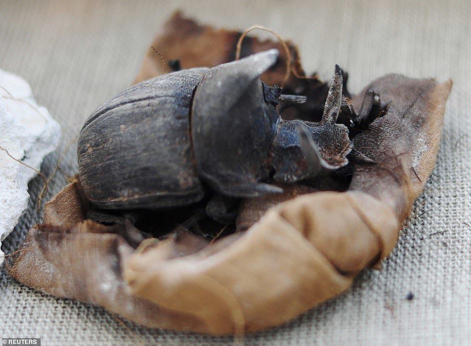 除了貓咪木乃伊,考古學家還發現了極為罕見的「聖甲蟲木乃伊」。photo cred...