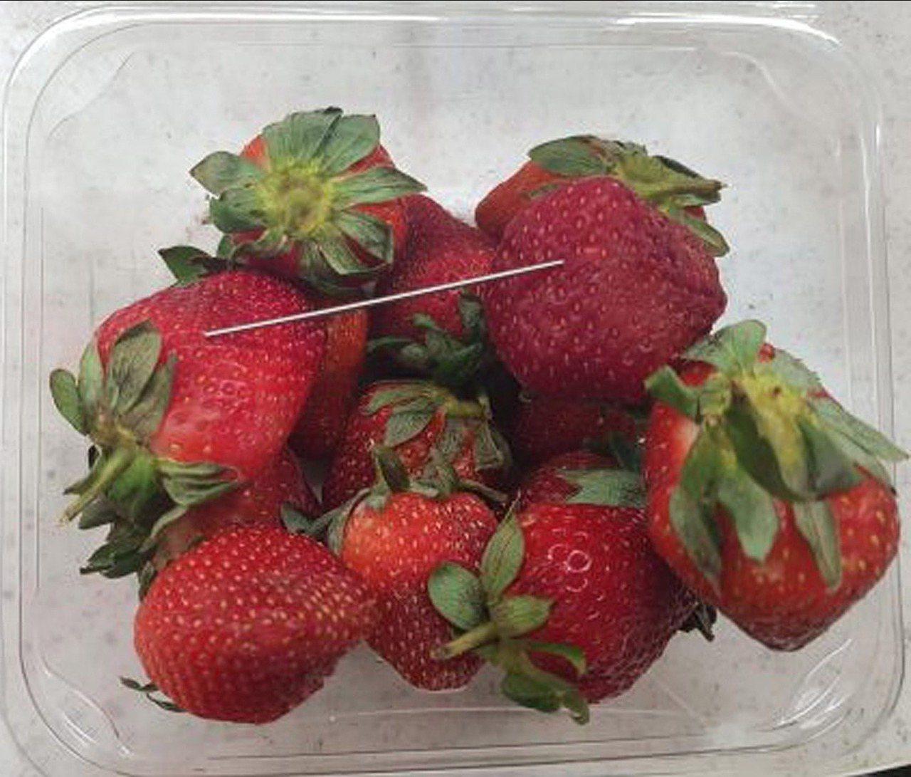 澳洲昆士蘭省9月發生草莓藏針案,引起民眾恐慌。昆士蘭警方11日宣布已逮捕一名50...