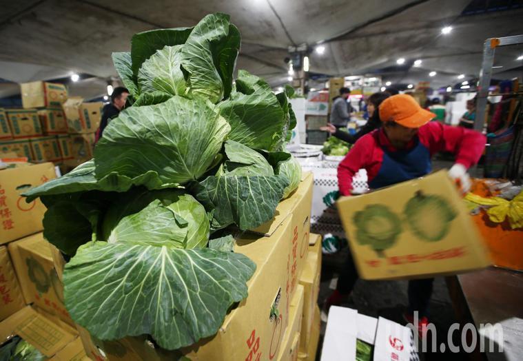 高麗菜。 報系資料照/記者杜建重攝影