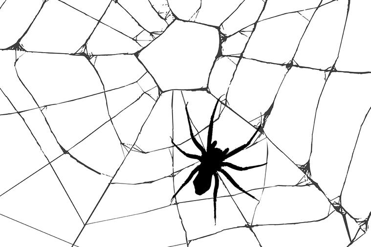 大部分被醫療專業人員照護到的「蜘蛛咬傷」,其實並不是蜘蛛咬傷。在一項研究中發現,...