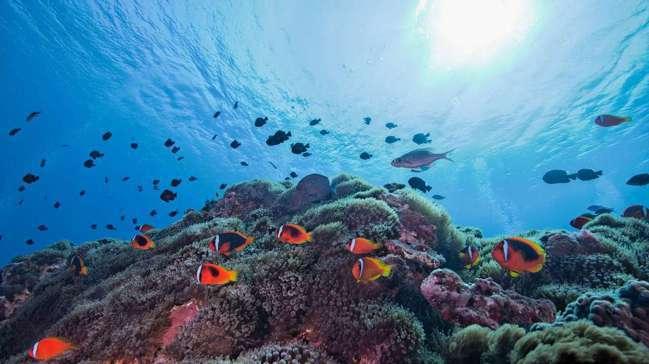 綠島千歲活珊瑚。 圖/觀光局提供