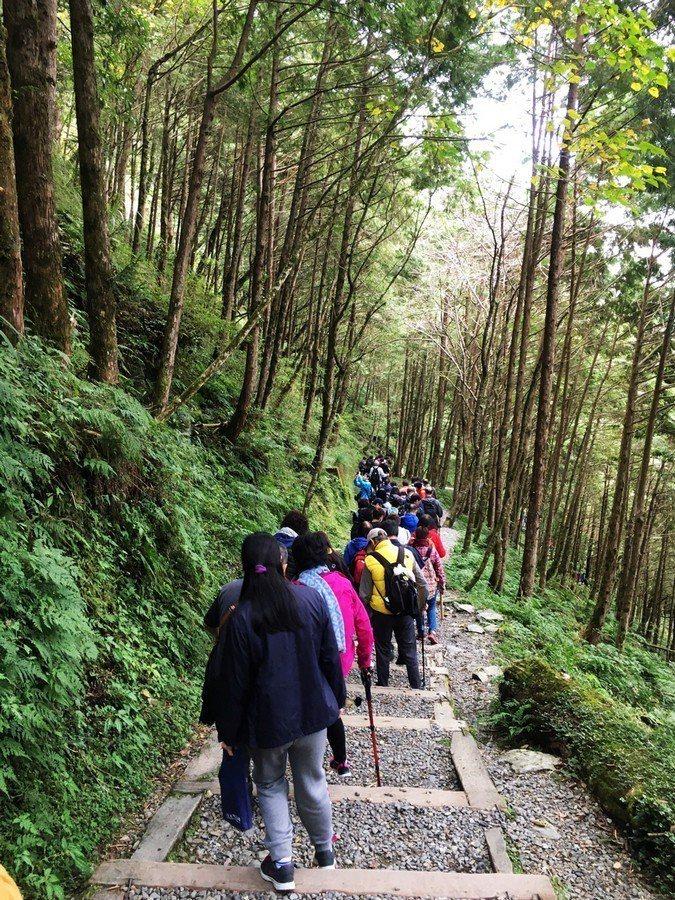 漫步在神木園裡體驗森林浴。圖/力麗觀光提供