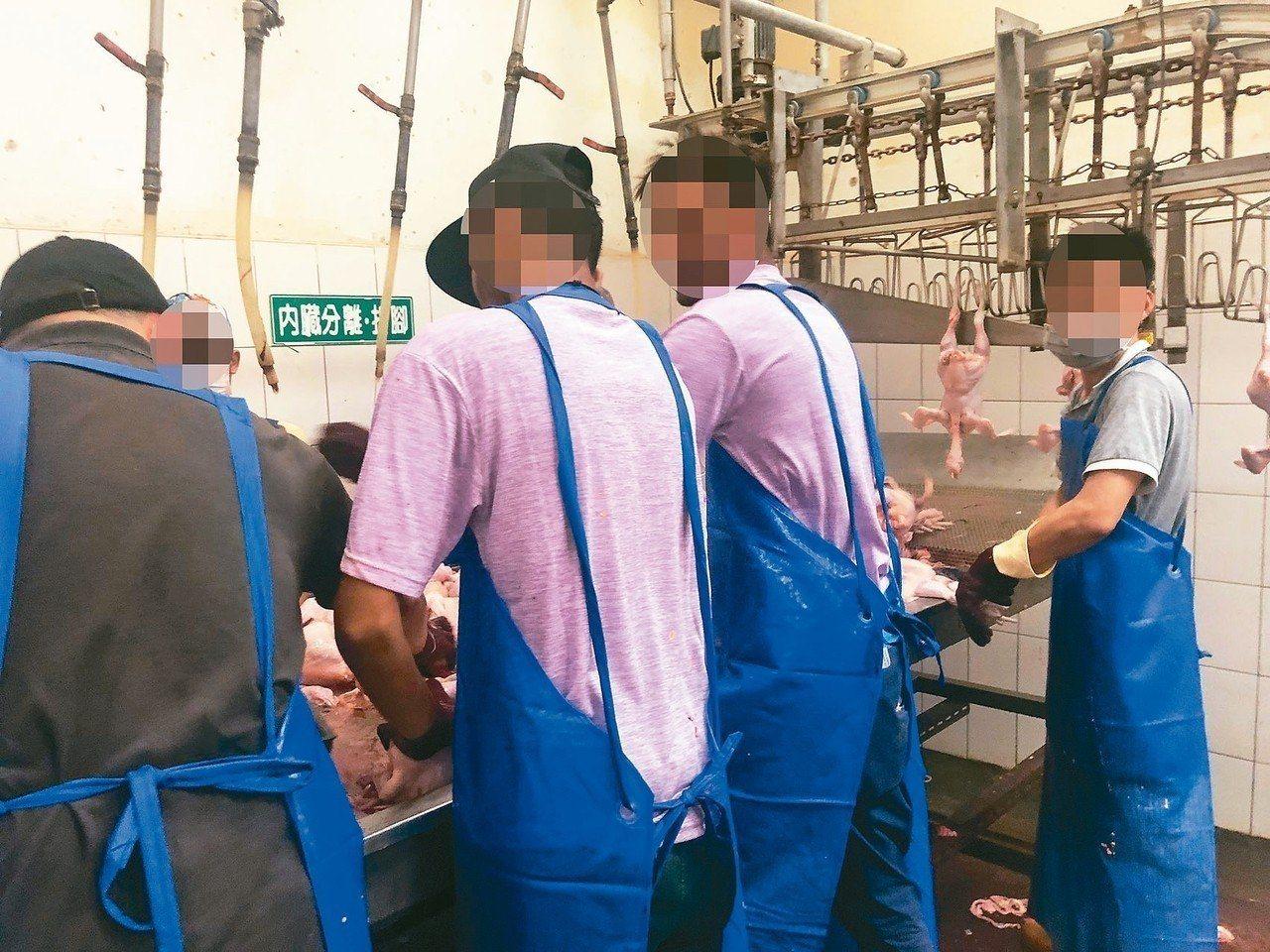 康寧大學一連爆出違法招收斯里蘭卡籍學生等多項違失,教育部將祭出「康寧條款」,以杜...