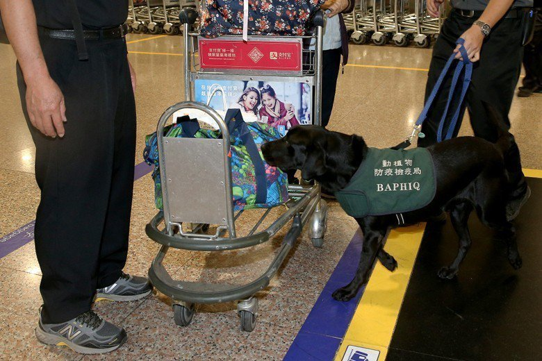 圖為桃園機場防疫犬執行防疫檢查作業。 圖/聯合報系資料照