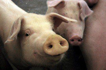 菜市場的法律學:木「豬」屠城記