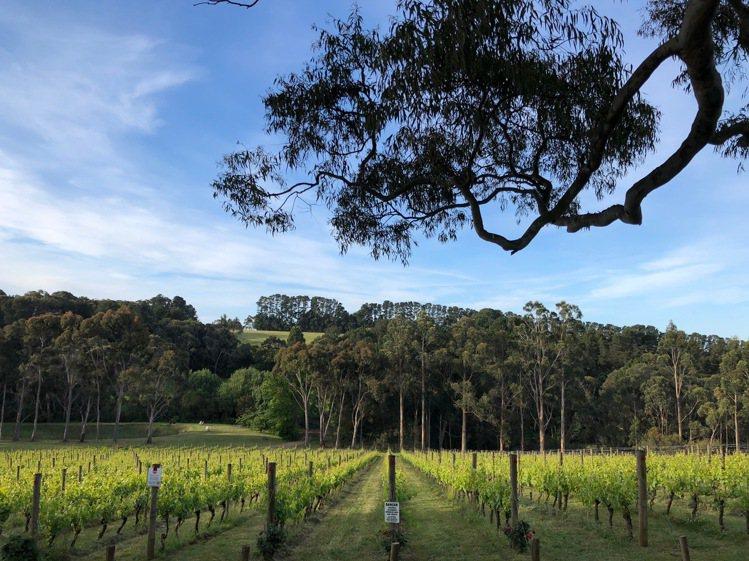 Polperro Winery的景致也是美不勝收,七彩菜園花園相間,巨木林旁供休...