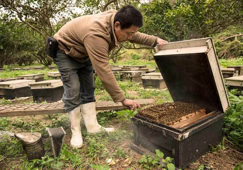 蜜蜂工坊提供。