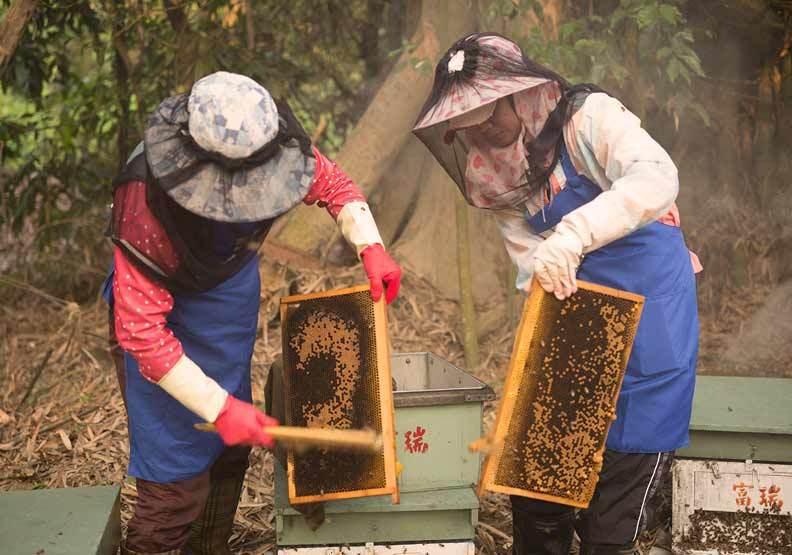 蜂蜜產業鏈面臨許多大環境問題。蜜蜂工坊提供
