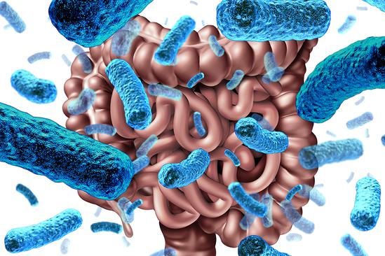 想保持腸道菌相的健康,我們要先知道怎樣算是健康的腸道菌相。 圖/ingimage