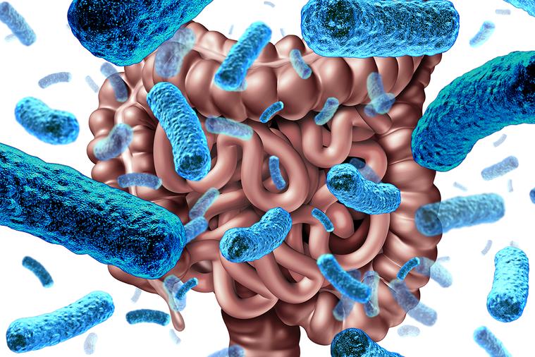 腸道菌。 圖/ingimage