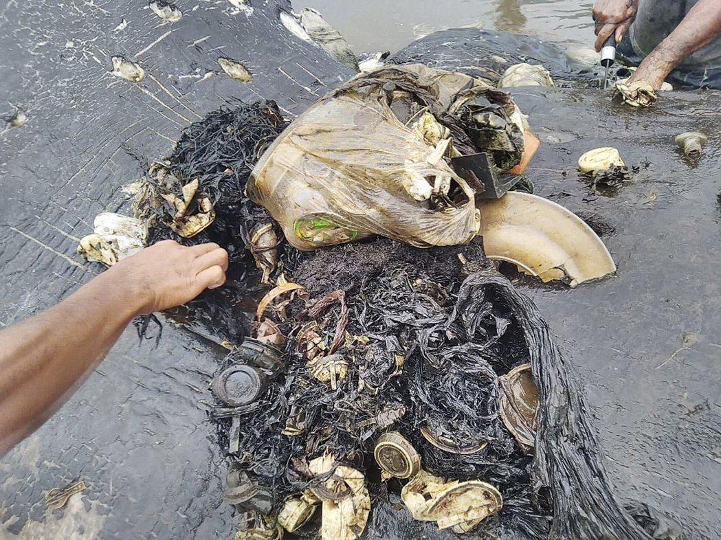 1條死亡的抹香鯨近日被沖上印尼岸邊,牠的胃部被發現有近6公斤的塑膠垃圾,包括2雙...