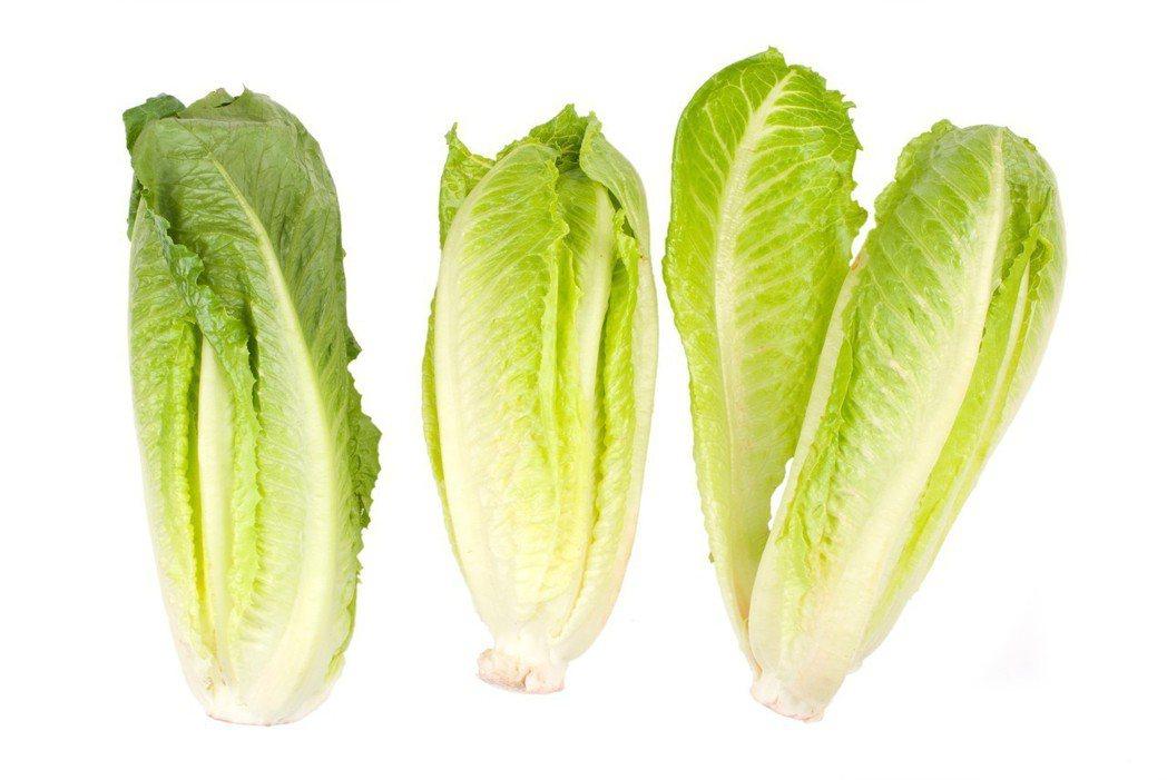 示意圖。美國日前發布蘿蔓生菜疑遭O157型大腸桿菌感染警訊,醫師表示,這種菌毒性...